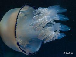 2009 Aquarium Barcelona_25