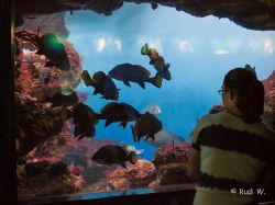 2009 Aquarium Barcelona_3