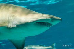 2009 Aquarium Barcelona_9