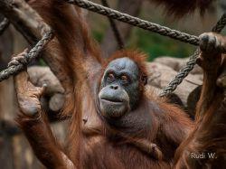 2013 Zoo Leipzig_19
